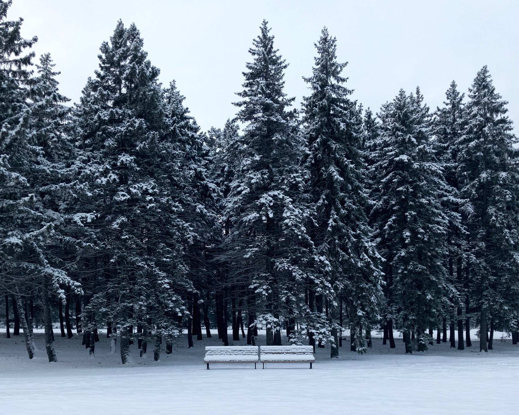 Two park benches covered in snow with a backdrop of snow-capped evergreens.